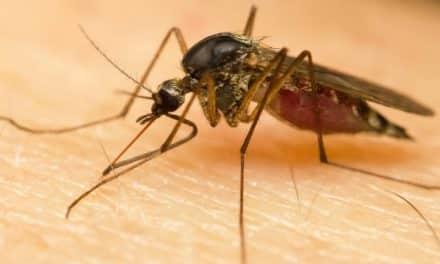¿Qué debes saber del virus Zika?