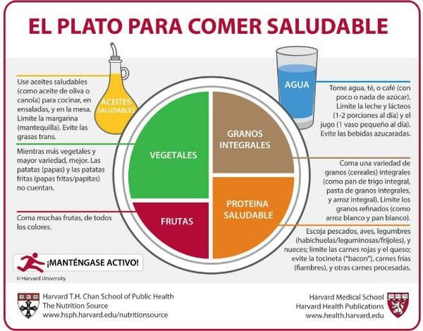 Distribución de alimentos en una dieta equilibrada saludable